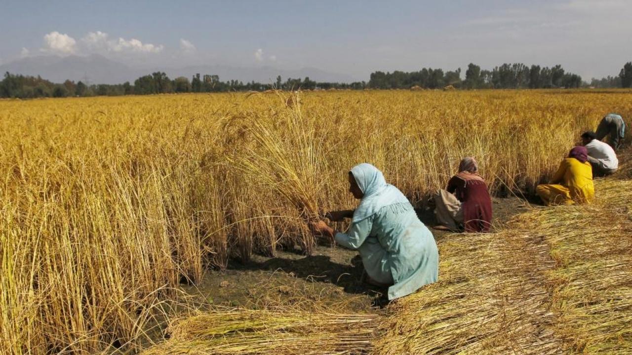 457601-india-farm-reuters