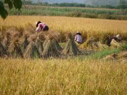 harvest india